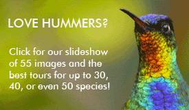 Hummingbirds slideshow